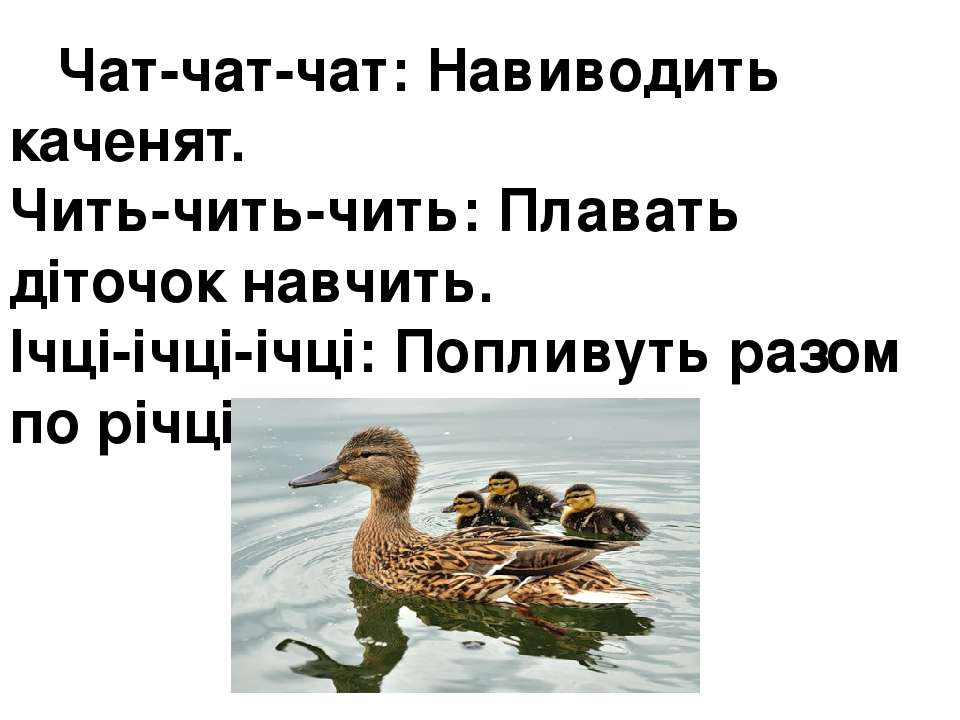 Чат-чат-чат:Навиводить каченят. Чить-чить-чить:Плавать діточок навчить. Ічц...