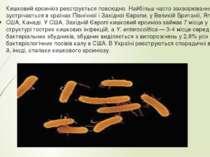 Кишковий єрсиніоз реєструється повсюдно. Найбільш часто захворювання зустріча...
