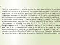 Yersinia enterocolitica—грам-негативнабактеріяроду єрсинія. Їй притаманна...