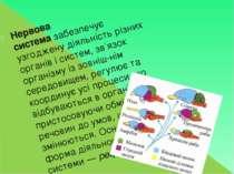 Нервова системазабезпечує узгоджену діяльність різних органів і систем, зв'я...