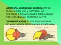 Птахи Центральна нервова системаптахів досконаліша, ніж у рептилій, що пов'я...