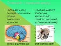Спинний і головний мозок Головний мозок складається з п'яти відділів: довгаст...