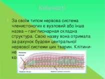 Кільчасті За своїм типом нервова система членистоногих є вузловий або інша на...