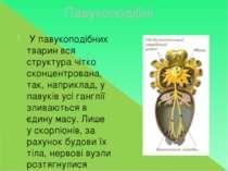 Павукоподібні У павукоподібних тварин вся структура чітко сконцентрована, так...