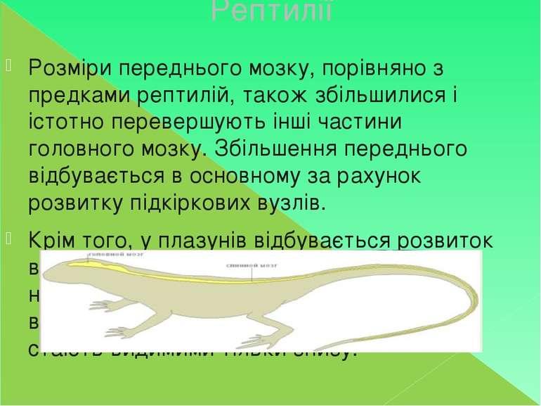 Рептилії Розміри переднього мозку, порівняно з предками рептилій, також збіль...
