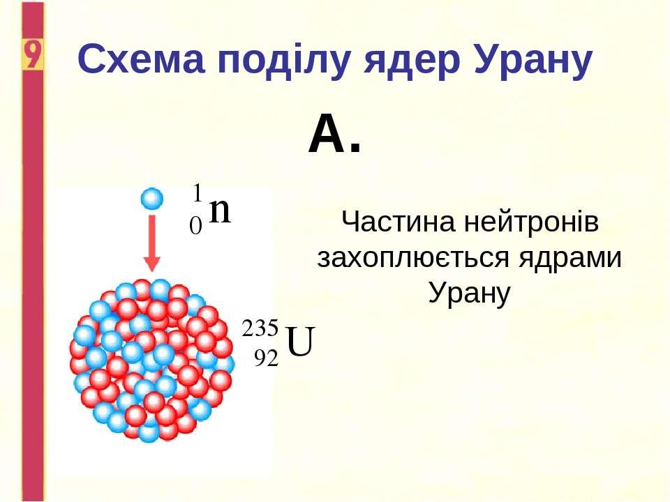 Схема поділу ядер Урану А. Частина нейтронів захоплюється ядрами Урану