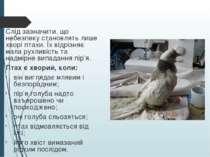 Слід зазначити, що небезпеку становлять лише хворі птахи. Їх відрізняє мала р...