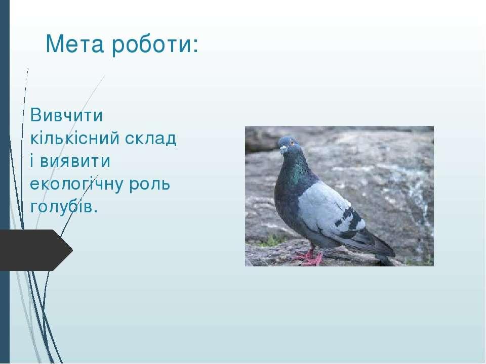 Мета роботи: Вивчити кількісний склад і виявити екологічну роль голубів.