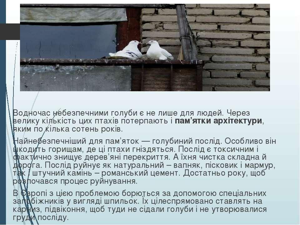 Водночас небезпечними голуби є не лише для людей. Через велику кількість цих ...