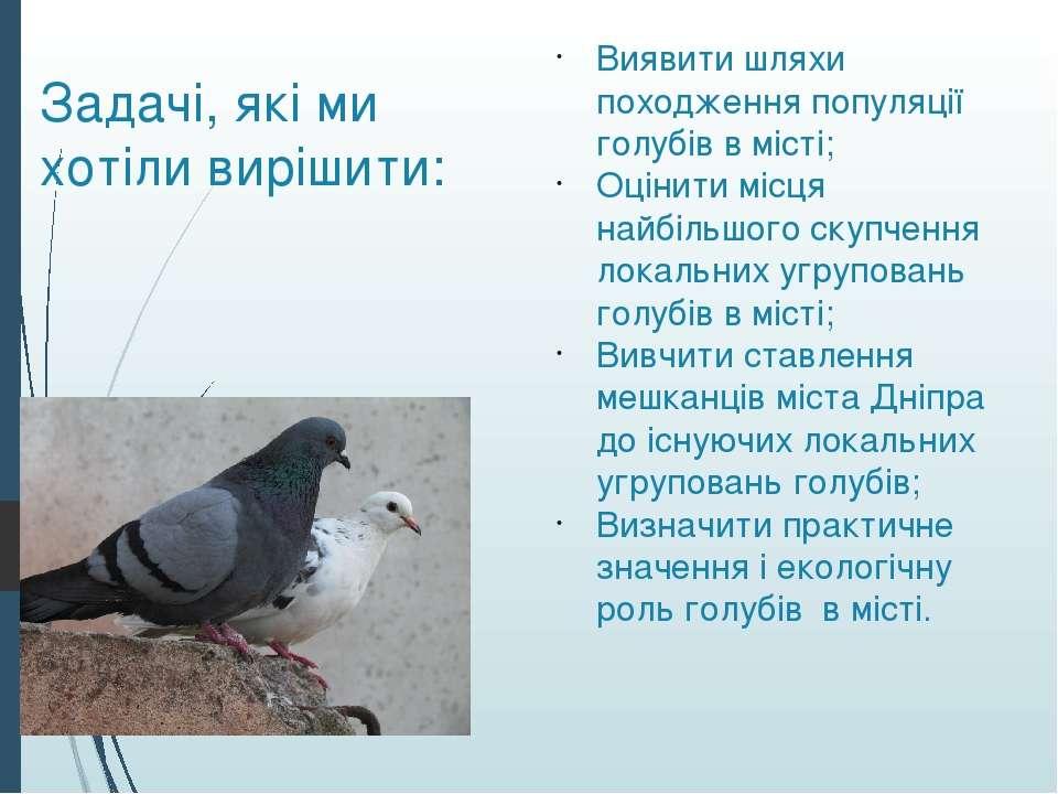 Задачі, які ми хотіли вирішити: Виявити шляхи походження популяції голубів в ...
