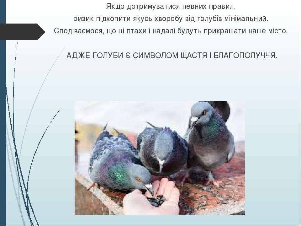 Якщо дотримуватися певних правил, ризик підхопити якусь хворобу від голубів м...