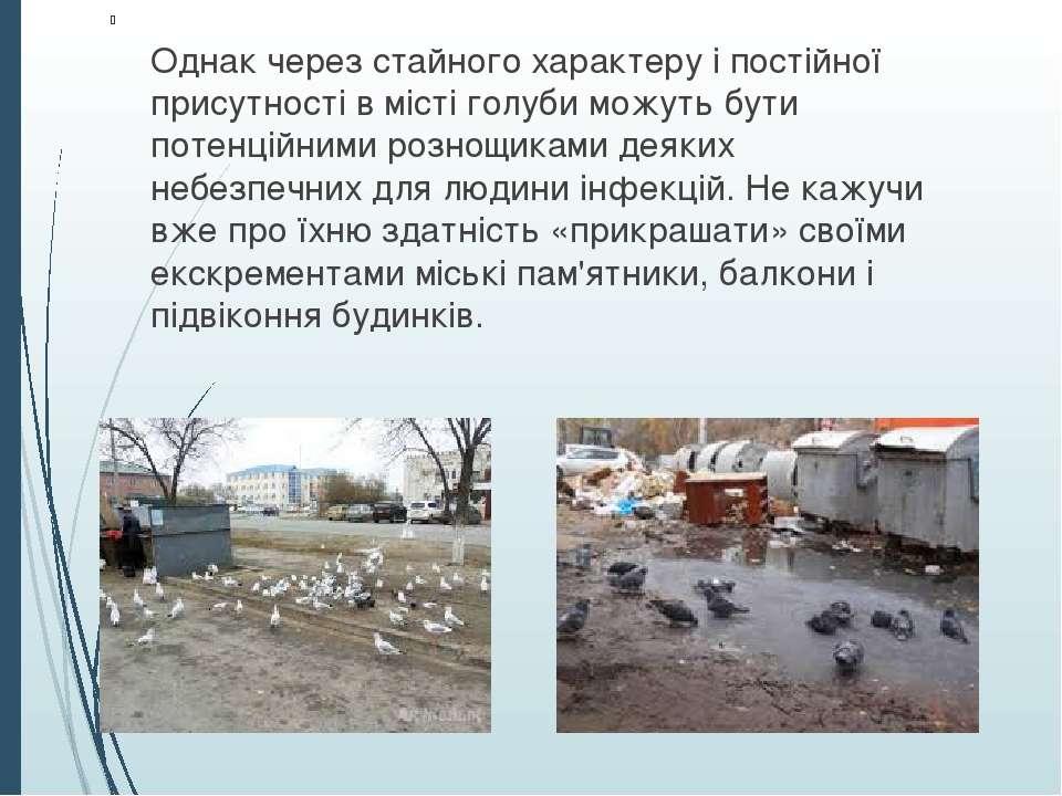 Однак через стайного характеру і постійної присутності в місті голуби можуть ...