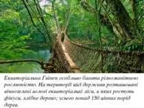 Екваторіальна Гвінея особливо багата різноманітною рослинністю. На території ...