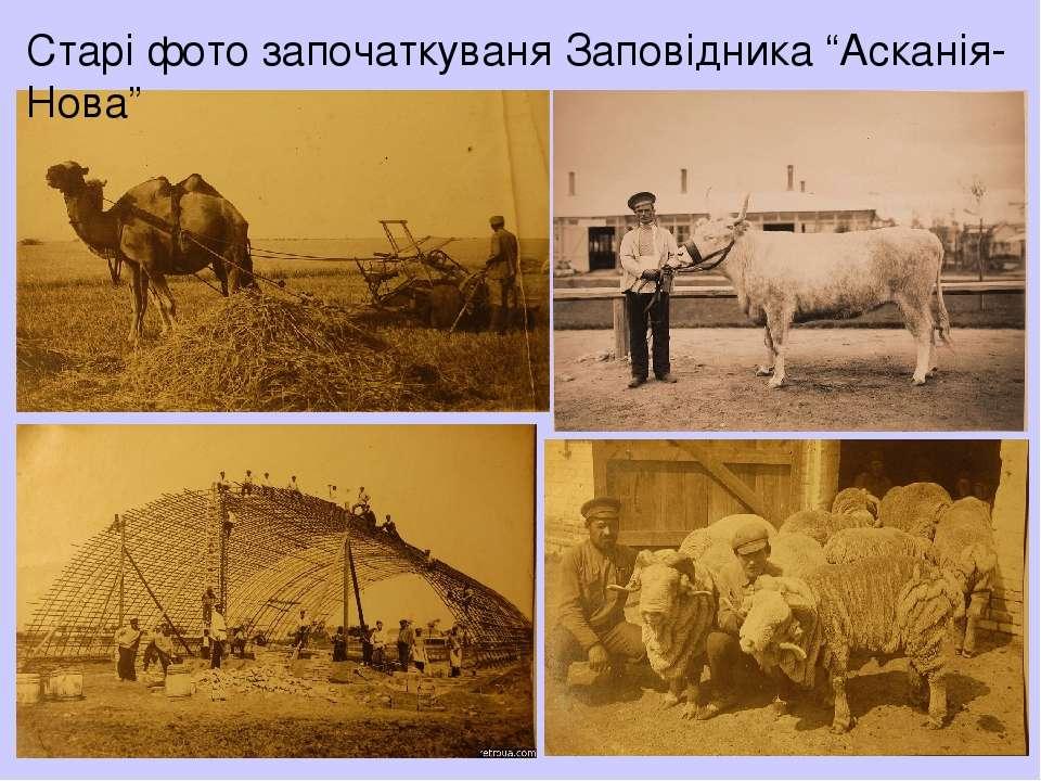 """Старі фото започаткуваня Заповідника """"Асканія-Нова"""""""