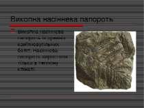 Викопна насіннева папороть Викопна насіннева папороть із древніх кам'яновугіл...