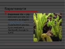 Барагванатія Барагвана тія— рід викопних рослин, що належить до відділуплау...