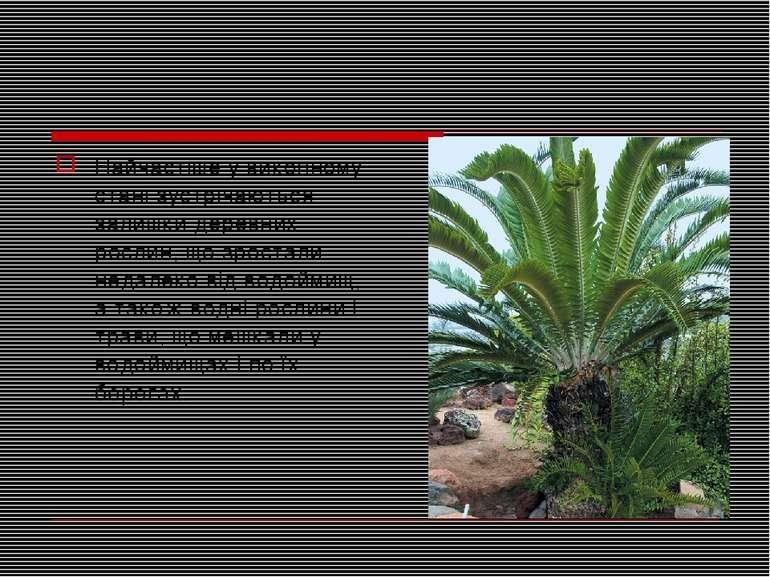 Найчастіше у викопному стані зустрічаються залишки деревних рослин, що зроста...