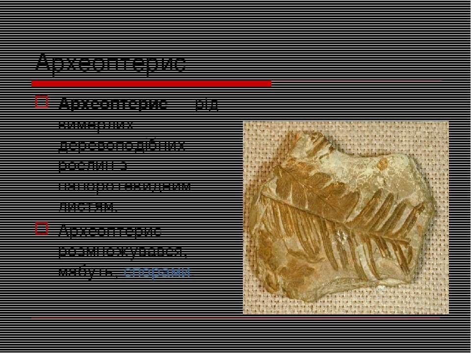 Археоптерис Археоптерис— рід вимерлих деревоподібних рослин з папоротевидним...