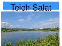 Teich-Salat