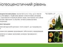 Біогеоценотичний рівень Біогеоценотичний рівень проявляється в тому, що в пев...