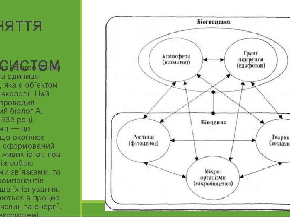Поняття про екосистеми Екосистема (біогеоценоз) — основна одиниця біосфери, я...