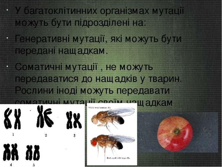 У багатоклітинних організмах мутації можуть бути підрозділені на: Генеративні...