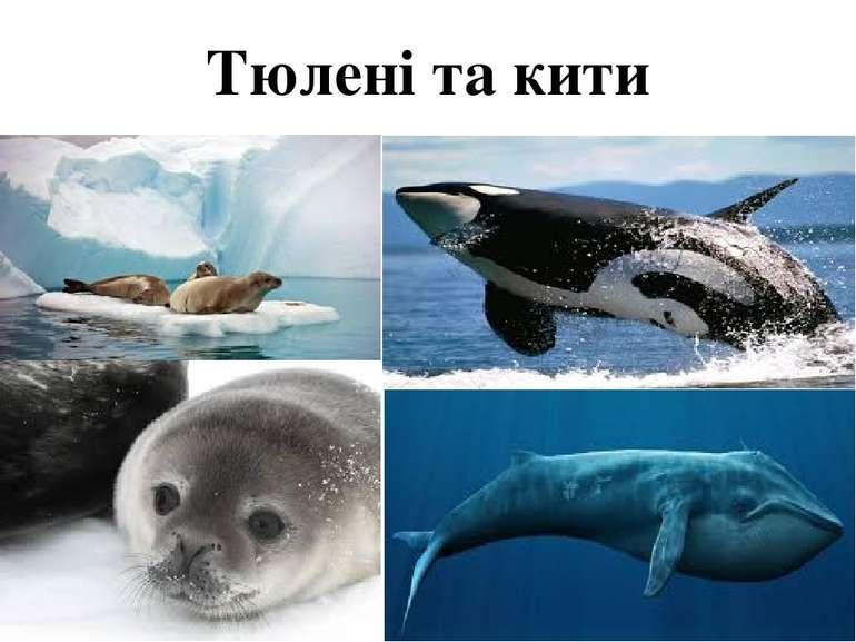 Тюлені та кити