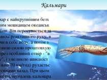 Кальмари Кальмар є найкрупнішим безхребетним мешканцем океанських глибин. Він...