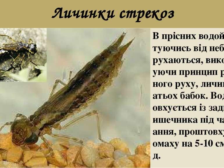 Личинки стрекоз В прісних водоймах, рятуючись від небезпеки, рухаються, викор...