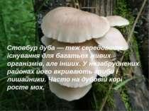 Стовбур дуба — теж середовище існування для багатьох живих організмів, але ін...