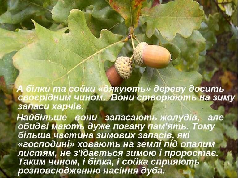 А білки та сойки «дякують» дереву досить своєрідним чином. Вони створюють на ...