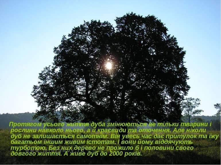 Протягом усього життя дуба змінюються не тільки тварини і рослини навколо ньо...