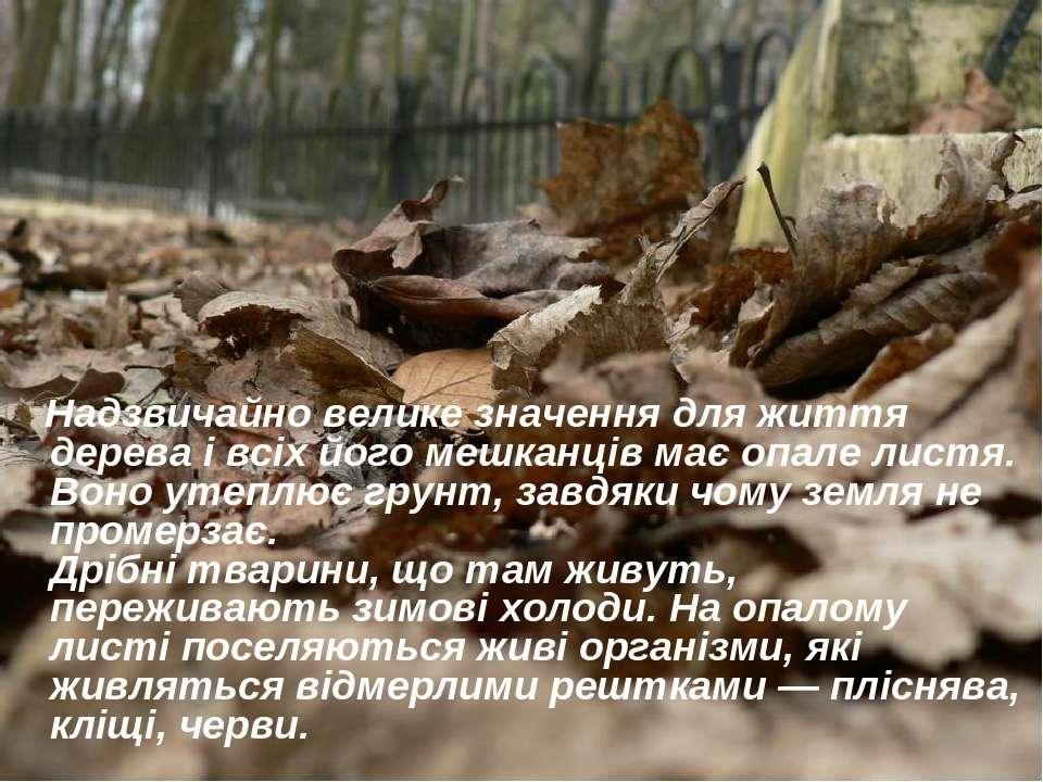 Надзвичайно велике значення для життя дерева і всіх його мешканців має опале ...
