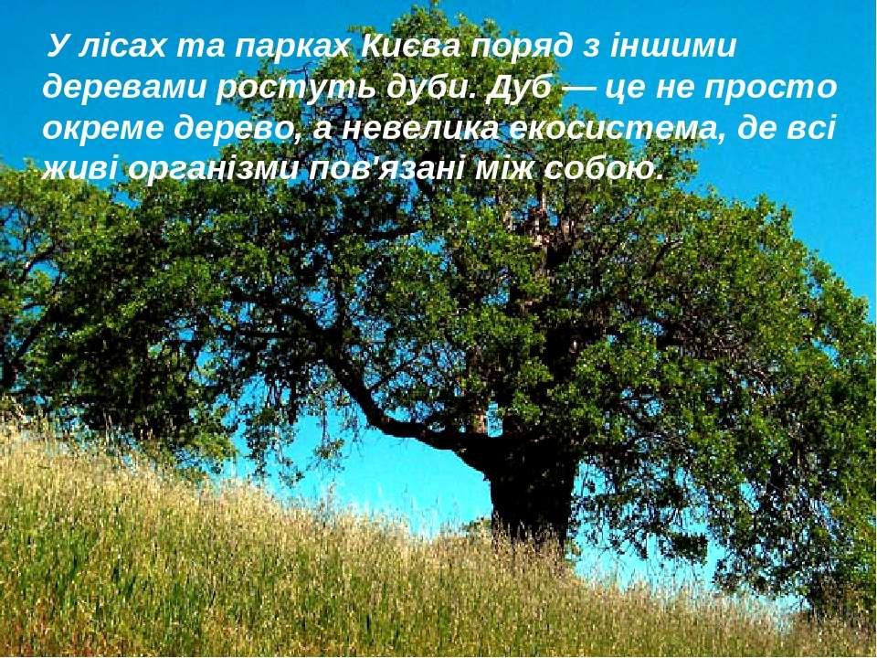 У лісах та парках Києва поряд з іншими деревами ростуть дуби. Дуб — це не про...