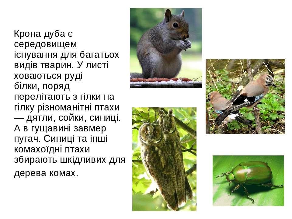 Крона дуба є середовищем існування для багатьох видів тварин. У листі ховають...