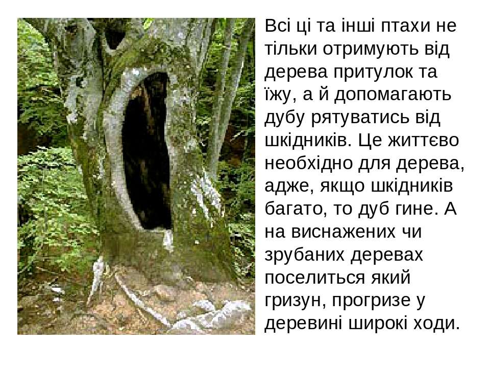 Всі ці та інші птахи не тільки отримують від дерева притулок та їжу, а й допо...