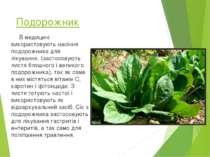 Подорожник В медицині використовують насіння подорожника для лікування, (заст...