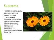 Календула Настоянку календули застосовують на ранніх стадіях гіпертонічної хв...