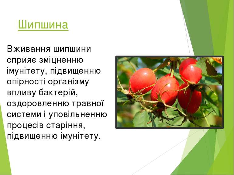 Шипшина Вживання шипшини сприяє зміцненню імунітету, підвищенню опірності орг...