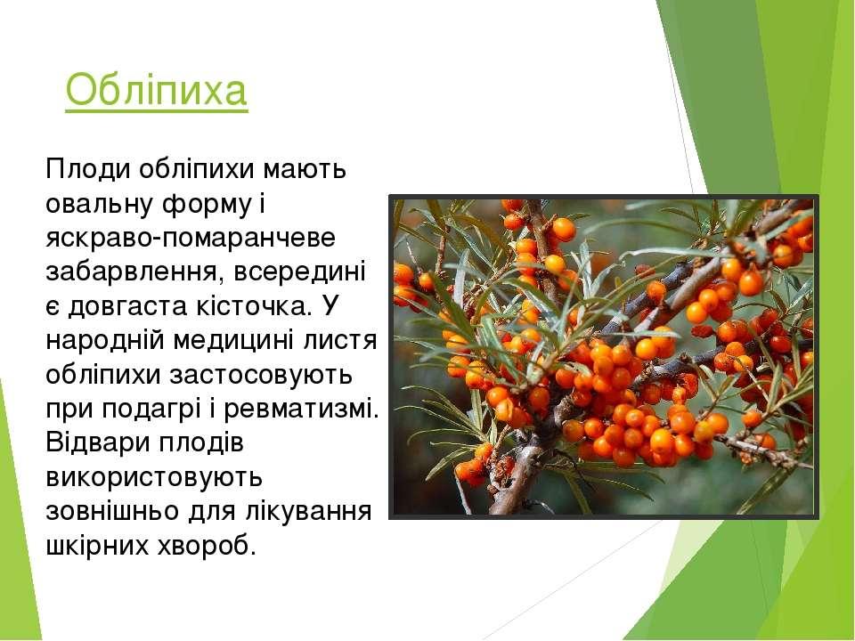 Обліпиха Плоди обліпихи мають овальну форму і яскраво-помаранчеве забарвлення...