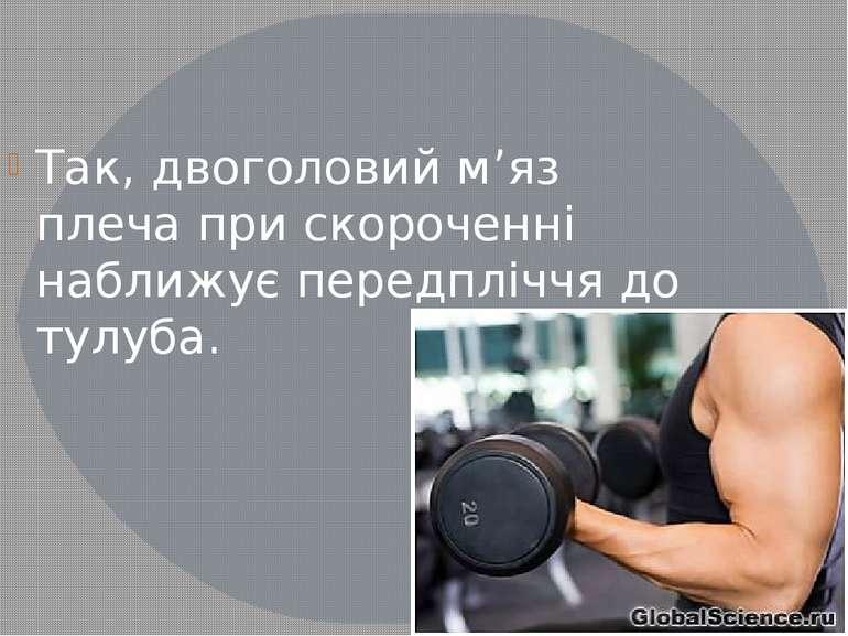 Так, двоголовий м'яз плеча при скороченні наближує передпліччя до тулуба.
