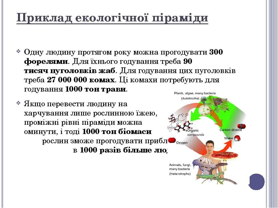 Приклад екологічної піраміди Одну людину протягом року можна прогодувати 300 ...