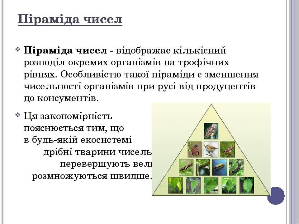 Піраміда чисел Піраміда чисел - відображає кількісний розподіл окремих органі...
