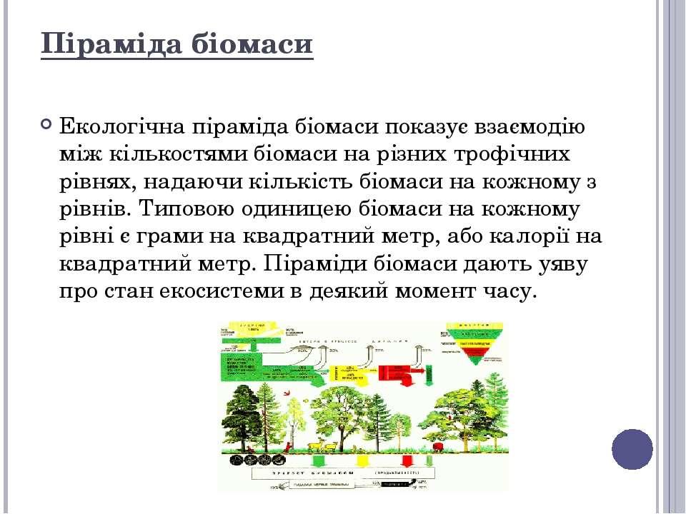 Екологічна піраміда біомаси показує взаємодію між кількостями біомаси на різн...