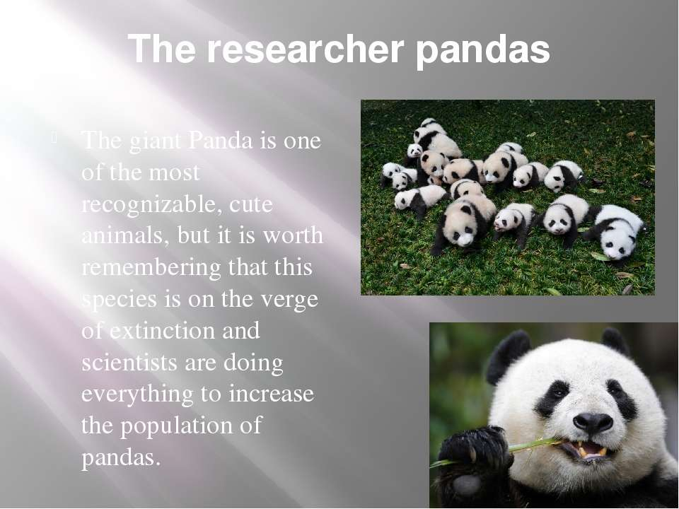 The researcher pandas The giant Panda is one of the most recognizable, cute a...
