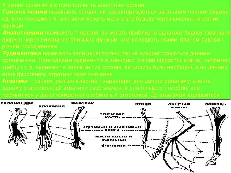 У різних організмів є гомологічні та аналогічні органи. Гомологічними називаю...