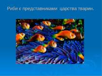 Риби є представниками царства тварин.