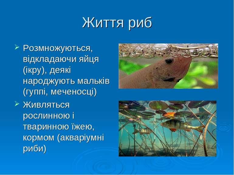 Життя риб Розмножуються, відкладаючи яйця (ікру), деякі народжують мальків (г...