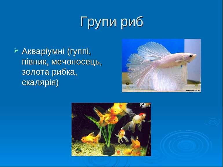 Групи риб Акваріумні (гуппі, півник, мечоносець, золота рибка, скалярія)
