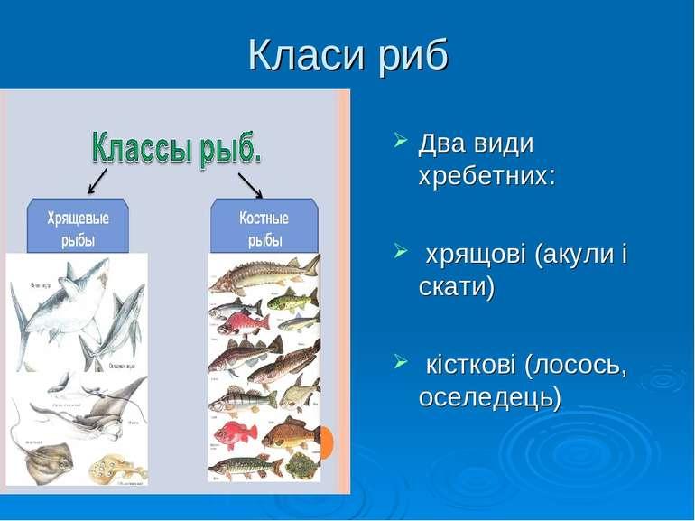 Класи риб Два види хребетних: хрящові(акули і скати) кісткові(лосось, осе...